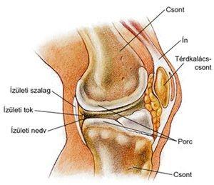 az összes ízület artrózisának hatékony kezelése mely szakember kezeli a térdfájdalmakat